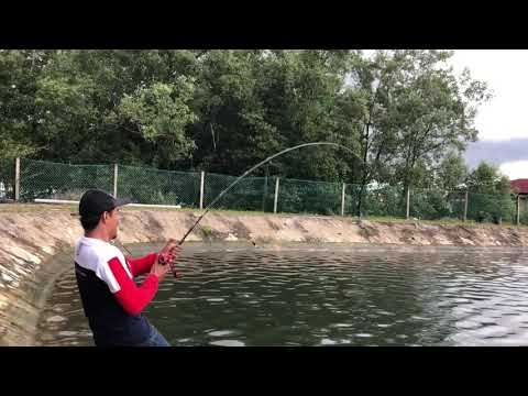 Pancing ikan Gt di Kolam