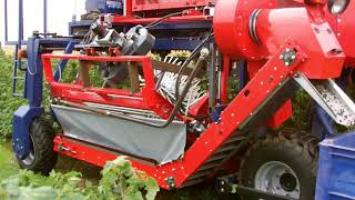 Blackcurrants harvester/ OSKAR 4WD  Porzeczka Czarna