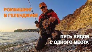 ПЯТЬ РАЗНЫХ РЫБ С ОДНОГО МЕСТА | Рыбалка в Геленджике - РЫБОЛОВНЫЕ ПУТЕШЕСТВИЯ