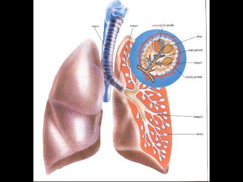 remedios caseros bronquitis obstructiva