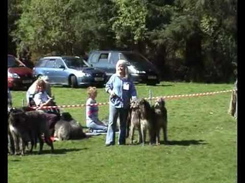Deerhound Breed Show, Dunblane, 2009