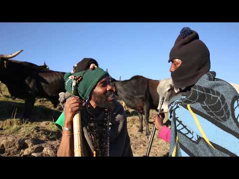 Molao Oa Lekhulo - Pitso Rah Makhula | Lesotho musician reminds herdboys of pasture laws