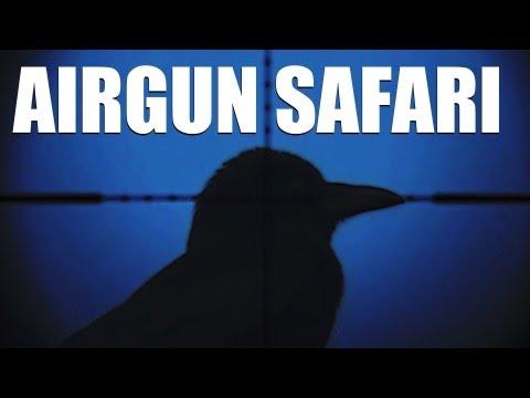 Fieldsports Britain : Airgun safari round a British garden + hunting red hartebeest  (episode 134)
