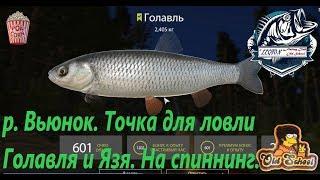 Русская рыбалка 4. р. Вьюнок. Точка для ловли Голавля на спиннинг.