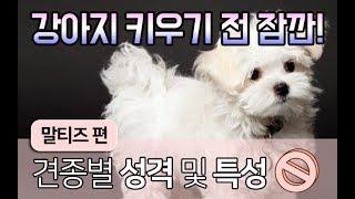 [강아지 정보] 말티즈 특징 어디까지 알고 계시나요? I 펫을부탁해