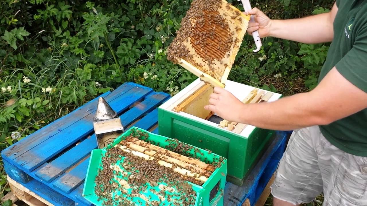 Nuc Hive Installation