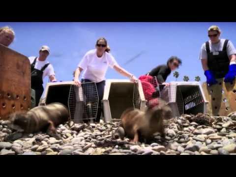 Louie Psihoyos: The extinction crisis