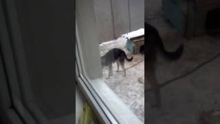 Собака дрочет