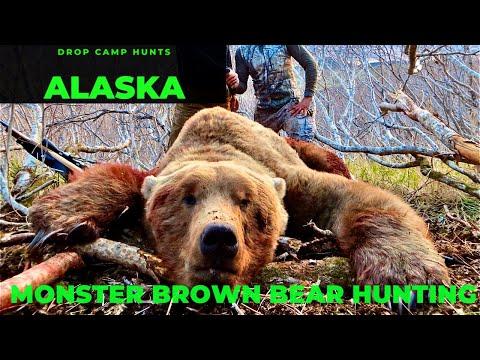 HUNTING GRIZZLY | MONSTER BROWN BEARS | ALASKA | ATO 41