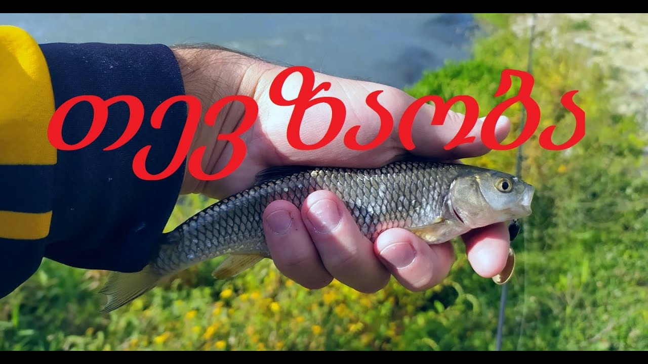 თევზაობა ქაშაპზე სპინინიგით შემოდგომა 2020