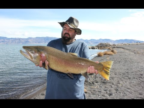 15lb Cutty, Fishing Pyramid Lake