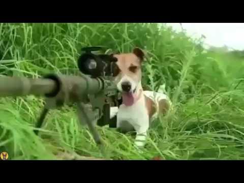 La guerra de perros vs gatos