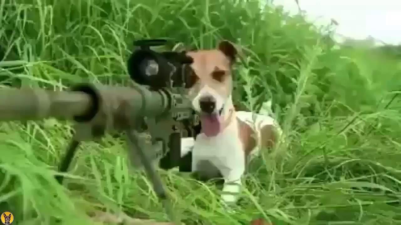 La Guerra De Perros Vs Gatos Youtube