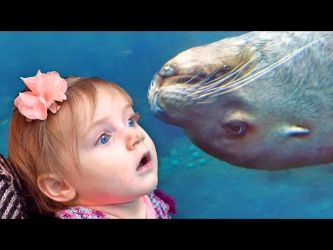 Alaska's Coolest Aquarium