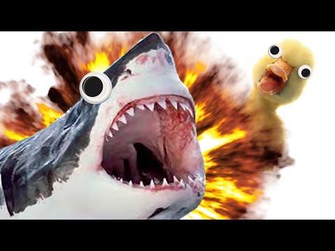 NOT THE DUCKS!! | Miami Shark