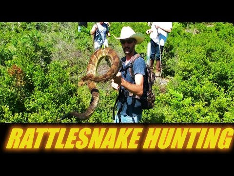 RATTLESNAKE HUNTING CAMP 2016  PENNSYLVANIA