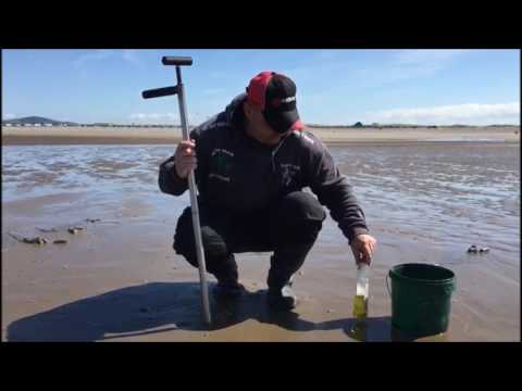 Sea Angling Adventures Presents :The Art Of Bait Pumping