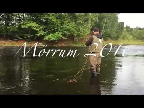 Mörrumsån 2016 Lax Fiske / Mörrum River 2016 Salmon Fishing Flyfishing