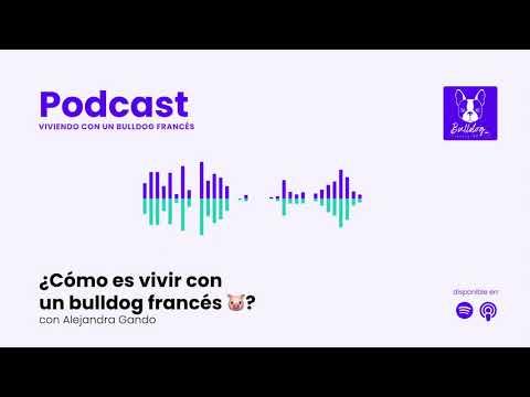 Especial: ¿Cómo es vivir con un bulldog francés 🐷? con Alejandra Gando