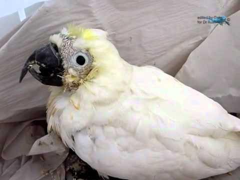 how to clean a beak