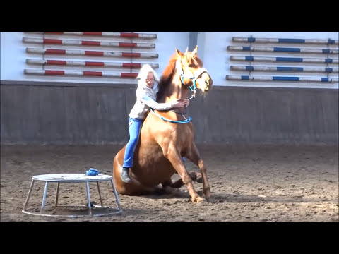 Bild: Horsemanship - Vertrauen auf hohem Nieveau,Horse Agility voller Leidenschaft