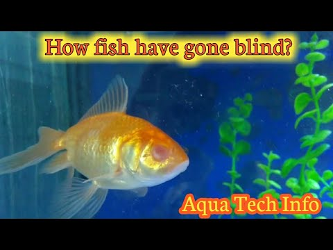#152. Why Fish Have Gone Blind?