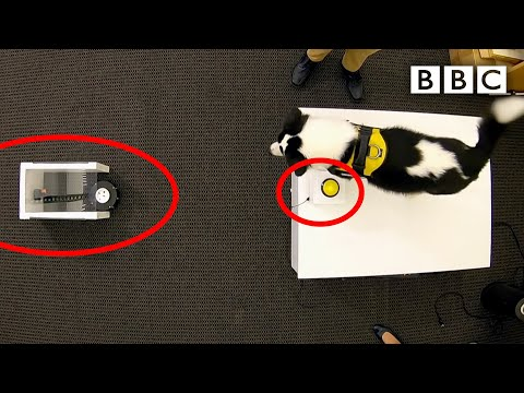 can-dogs-drive-robots?---bbc