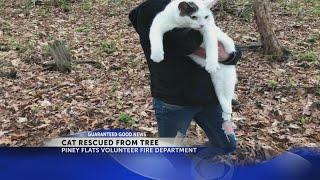 Piney Flats Volunteer Fire Department rescues cat stuck in a tree