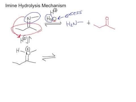 Imine Hydrolysis