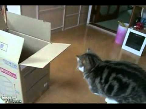 Video divertente di bambini cani gatti ed altro by for Youtube cani e gatti