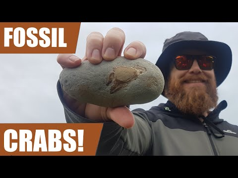Fossil Hunt Adventure - I Go Back To Where I Found The Whale Skull To Find Some Miocene Fossils