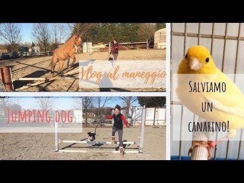 Vlog al Maneggio | Jumping dog | Salviamo un canarino!