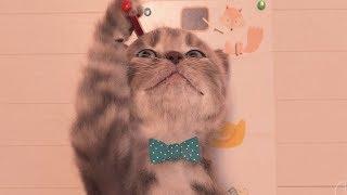 Little Kitten Preschool Adventure Kids Game - Play Pet Animal Care In School - Kids Learning Games