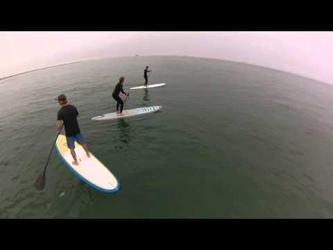 GREAT WHITE SHARKS Huntington Beach