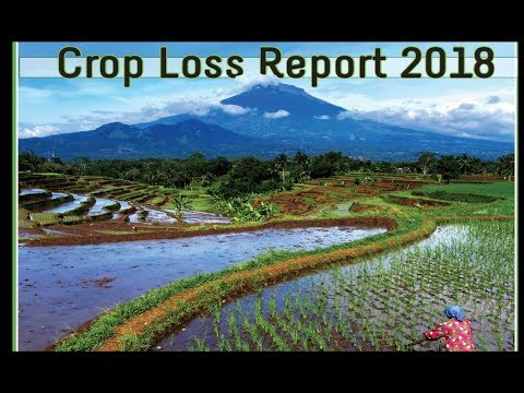 SPECIAL: Global Food Production Report [Peak Food] & Creeping Disclosure