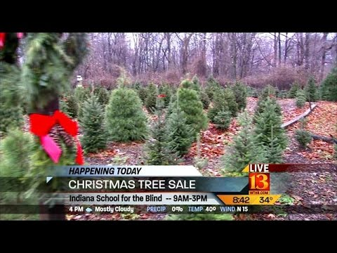 Indiana School for the Blind Christmas tree sale