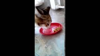 Кошка Мася кушает горох.