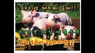 [돼지띠 83년생 39살 돼지띠운세]#무료점#신…