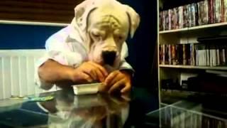 כלב אוכל כמו בן אדם