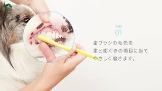 愛犬の歯みがきにおすすめの歯ブラシ・超やわらか歯ブラシ【ペピイチャンネル】