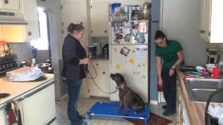 "Kaster  ""the Art Of Attention"" Fort Wayne Dog Training - Dog Psychology And Training Center"