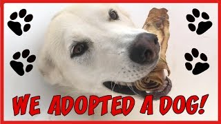 We Adopted a Dog! | Clear The Shelters | Gerberian Shepsky | Shelter Dog