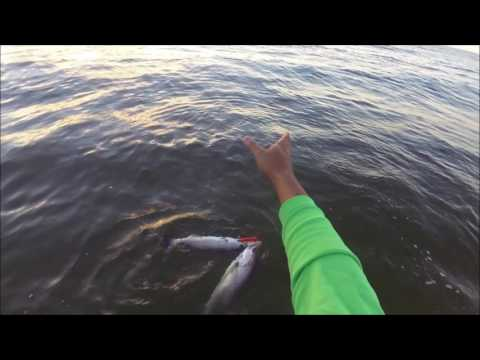 Two Trout, One Lure - Surf Wading for Trout, Galveston, Texas