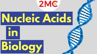 Nucleic Acids | Biological Molecules Simplified #3