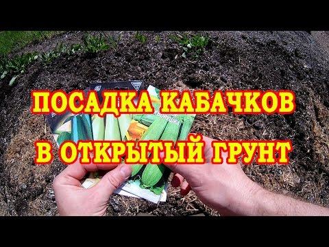 ПРОВЕРЕННЫЙ СПОСОБ. ПОСАДКА КАБАЧКОВ В ОТКРЫТЫЙ ГРУНТ | открытом | кабачков | посадка | кабачок | кабачки | семена | сажать | сажаем | огород | грунте