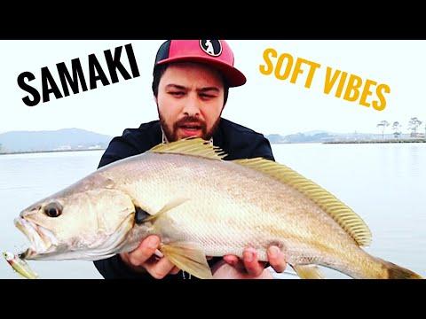 MULLOWAY ON SAMAKI SOFT VIBES | Jewfish