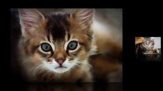 Кошки Подборка. Смешные кошки и коты. Фото подборка.
