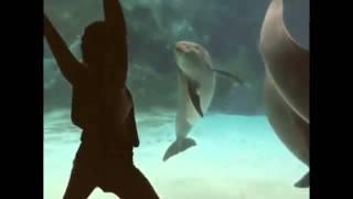 Шоу для дельфина  Девочка хотела сделать необычное