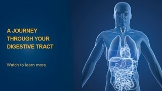 The Digestive Process - University of Michigan Health System