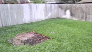 Backyard After Playset Removal